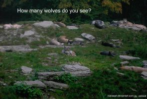 How many wolves do you see? by KIARAsART