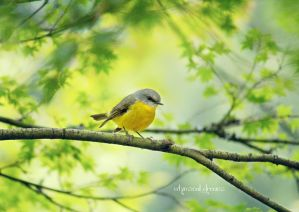 .:: Fly little Robin ::. by Whimsical-Dreams