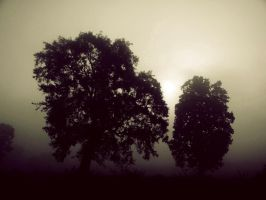 Trees with Shine by satyam9999