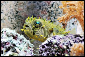 puffer03 by delobbo