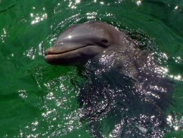 Dolphins by AllyCat1994