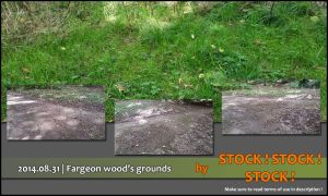 2014.08.31 | Fargeon wood's grounds by Stock-Stock-Stock