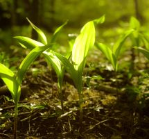 Lily of the valley by Anna-Belash