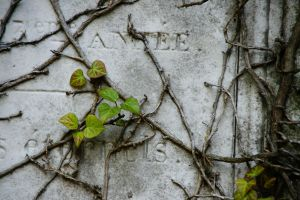 Life after Death by Heurchon