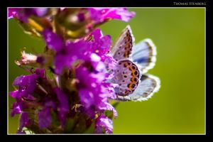 Blue wing by tomba76