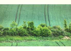 Limes by 13-septembre