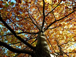 Looking up in the Fall by Michies-Photographyy