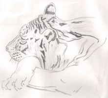 Tiger Lines by IcePanthress