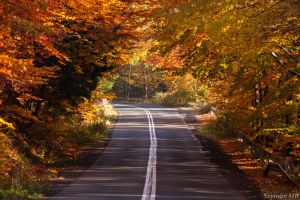 Autumn road by SzymonMic