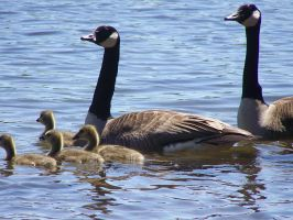 The Geese 4 by hieiluva89