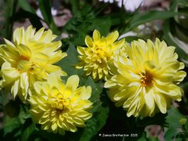 The Color Of Sunshine by jim88bro