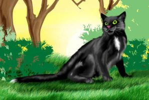 Reminiscing Ravenpaw by RainbowStarCat