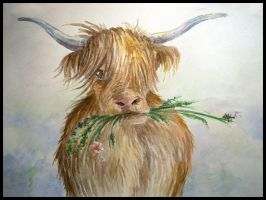 Highland Cow by shadow-of-kyle