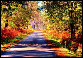 forest road by glad2626