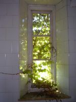 Insane Asylum Window Creeper by aegiandyad