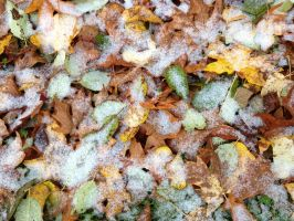 Frosted Leaves 2 by MogieG123