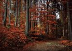 autumn forest stock by baravavrova