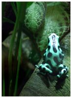 poison dart frog by Rainfeather