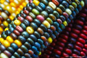 Colorful Corn by JustinDeRosa
