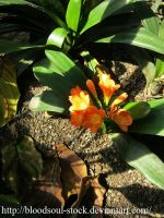 tropical flower 07 by Bloodsoul-Stock