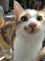Patches the stray kitten by WhollyUnwind