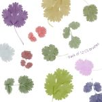 12 Coriander Leaf Brushes by stockphoties
