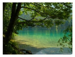 Eaux verdoyantes -Greeny water by achel