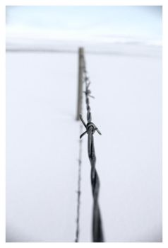 Barbed wire by MadisonScott
