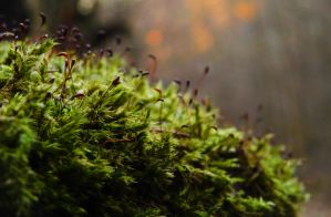 Moss II by MoonKey19