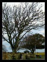 Tree Without Leaves 01 by celeste