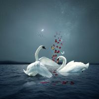 Love And swans... by MOham11