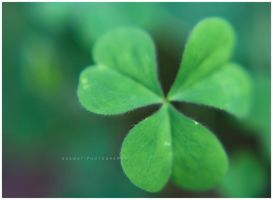 Shamrock 02 by Saswat777