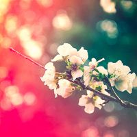 Blossoming Branches by LashelleValentine