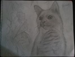 1st attempt on drawing real life things (cat) by VanishedReality