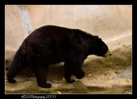 Oh Bear by artisticallylearning