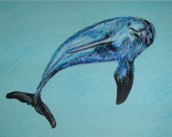 Dolphin by Twimper