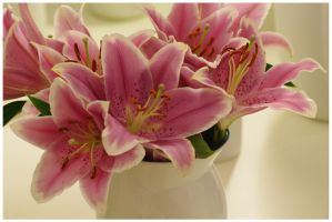 Lillies by Fuchsia-Groan