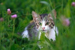 Lurking in the grass by luka567