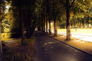ForestRoad by PhotoCanon
