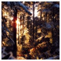 Sunrise from the snowy forest by Discomax