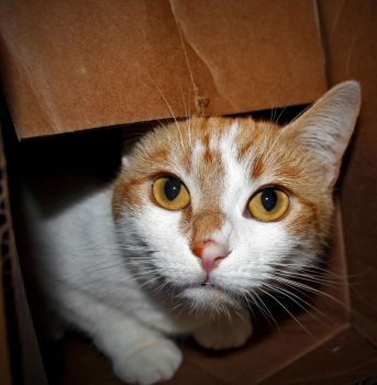 BoxCat by Rowan1968