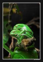 loving frogs... by Grabo23
