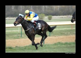 Horse Racing 2008 11 by grugster