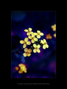 Yellow in between by Qa9ed2000