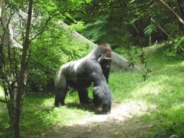Silverback by youvegotpictures