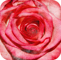 The center of a rose by OcularFracture