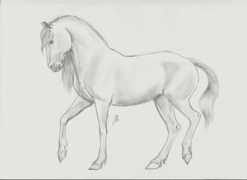 drassage horse - traditional by horse-art-here