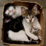 cats in box by J3003