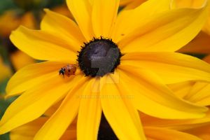 LadyBird Under The Sun by EIENEMY