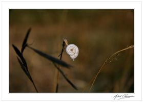 The concentric magic circle... by Michel-Lag-Chavarria
